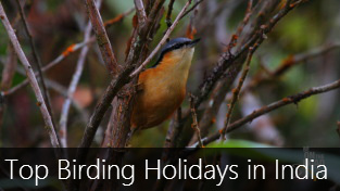 Top 7 Birding Holidays in India