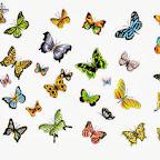 set - Butterflies Designs