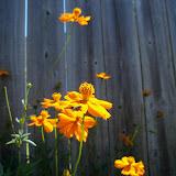 Gardening 2011 - 100_9140.JPG