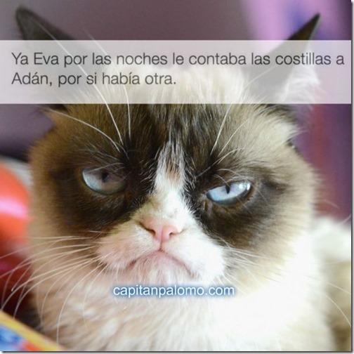 meme del gato gruñon (4)