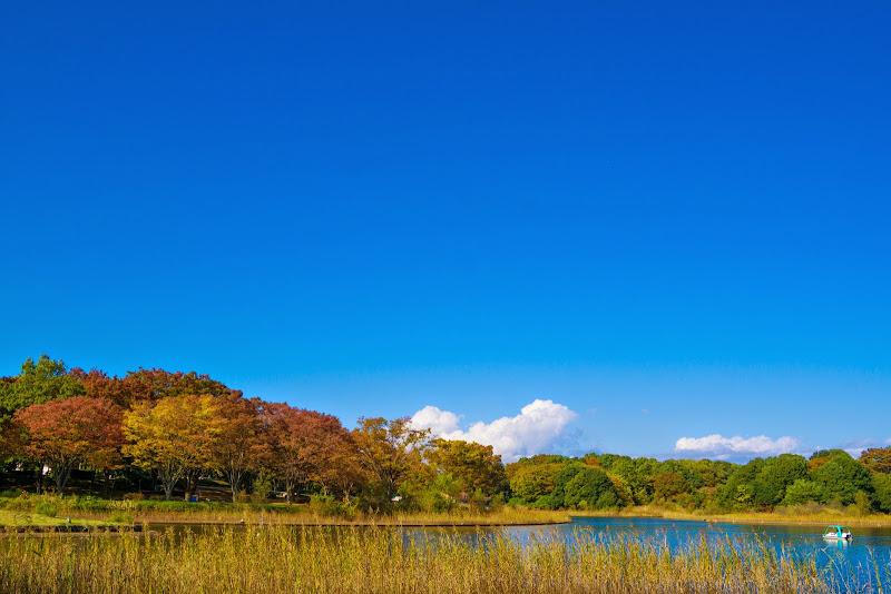 昭和記念公園 紅葉 写真2