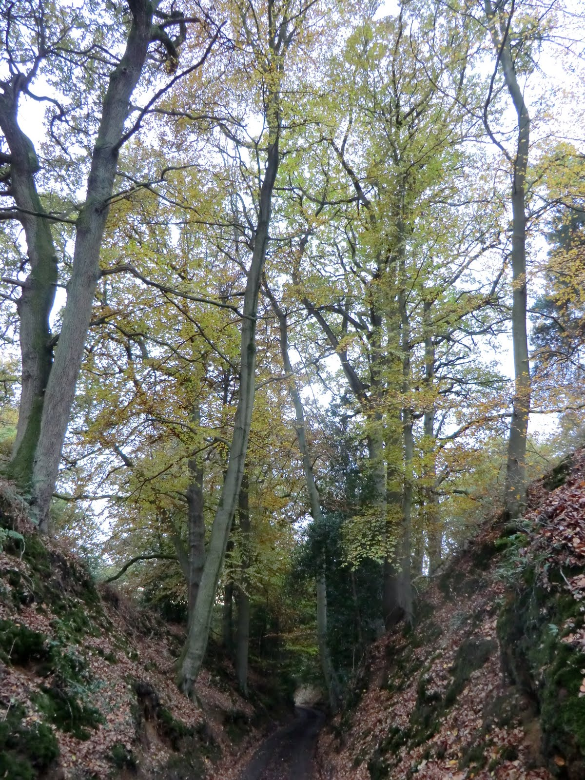 CIMG9713 Sandy Lane in autumn