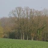 Hautes-Lisières (Rouvres, 28), 28 mars 2011. Photo : J.-M. Gayman