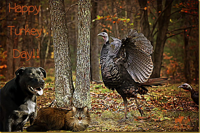 Kristy Rosenfeld Turkey with Matt & Matilda_edited-1