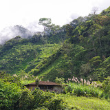 Las Juntas, 1250 m (Carchi, Équateur), 4 décembre 2013. Photo : J.-M. Gayman