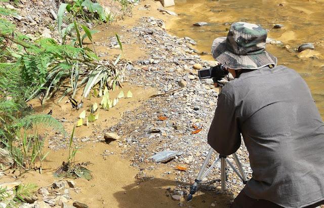Papilionidae et Pieridae mud-puddlant. Rio Zongo (alt. 600 m). Bolivie, 30 janvier 2008. Photo : J. F. Christensen