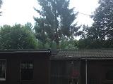 bomen vellen.JPG