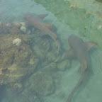 Tiburones del Acuario
