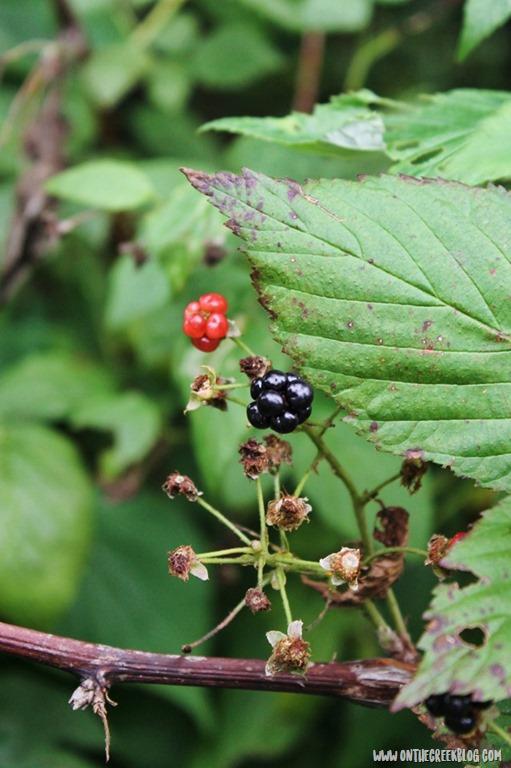[blackberries7%5B6%5D]
