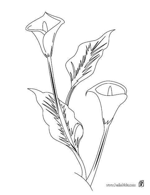 Arum Lily Coloring Page
