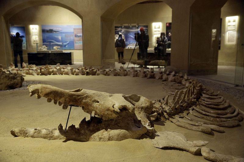wadi-al-hitan-museum-6