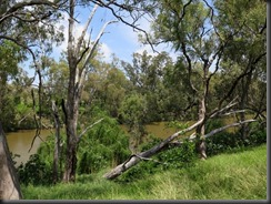 171105 027 Goondiwindi Macintyre River Walk