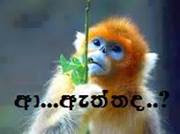 aththada sinhala photo comment