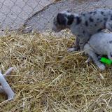 Thelma & Garths 3/21/12 litter - SAM_3343.JPG