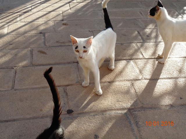 пятничные котики и птички