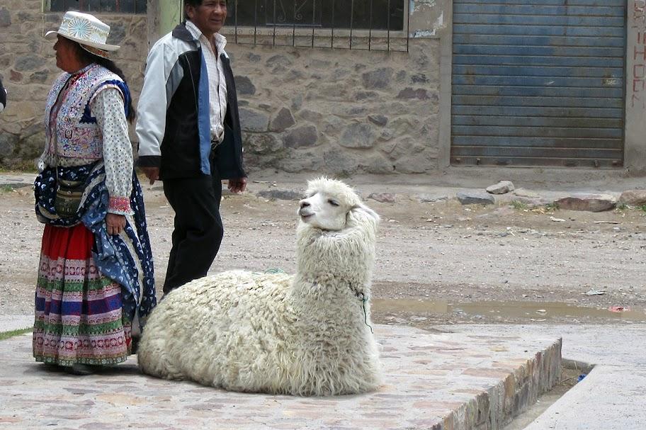 Nhưng mà đối với tu rít thì đơn giản là hỏi. Đừng rụt rè. Alpaca