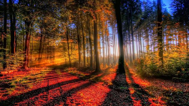 ¡¡¡El maravilloso mundo en el que vivimos!!! 2778d84f-f110-42a5-9e9c-9bade899a0be