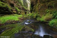 Grüne Kirnitzschschlucht (http://www.Naturfoto-Steudner.de)