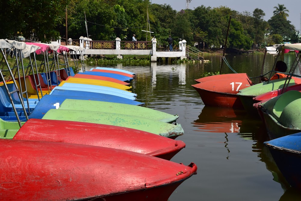 paddle boats for rent on the lake