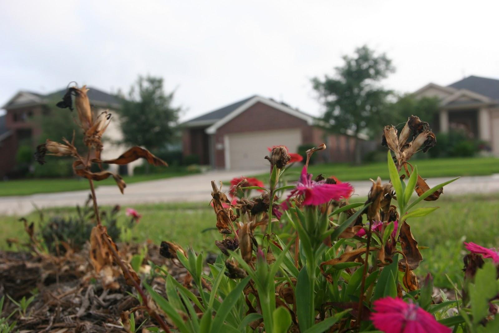Gardening 2012 - IMG_3365.JPG