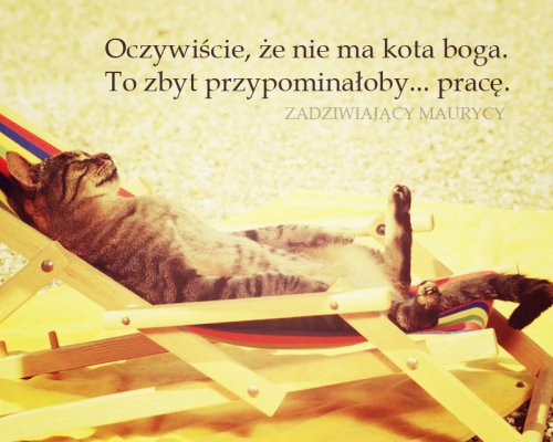 Nie ma kota boga
