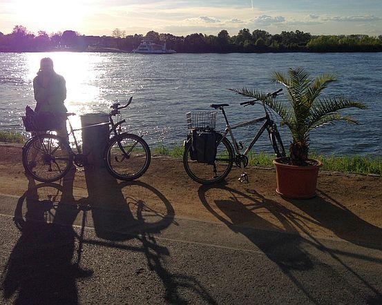 Fahrräder und Miri im Gegenlicht in der Abendsonne am Rhein in Gernsheim