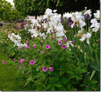 5 bancroft flowers