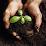 Tyler Biochar fertilizer's profile photo