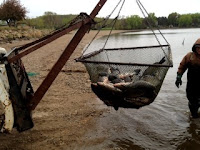 April 2012 Commercial Carp Fishing