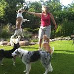 Blandede hunde - Iphone%2B19%2Bnov.2011%2Bthorleif%2B119.JPG