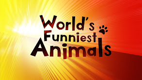 World's Funniest Animals thumbnail