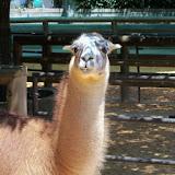 Houston Zoo - 116_8533.JPG