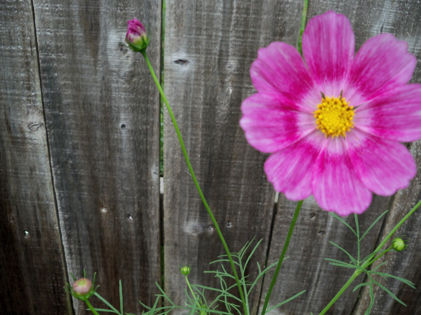 Gardening 2010 - 101_1587.JPG