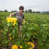 2013 vendanges du chardonnay - 2013%2B09%2B28%2BGuimbelot%2Bvendanges%2Bdu%2BChardonnay%2B118.jpg