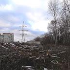 Вырубки ЛЭП в Воронежской Нагорной Дубраве 030.jpg