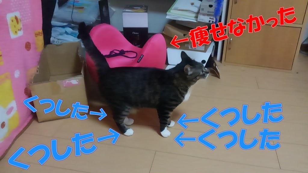 足が靴下柄の猫の写真