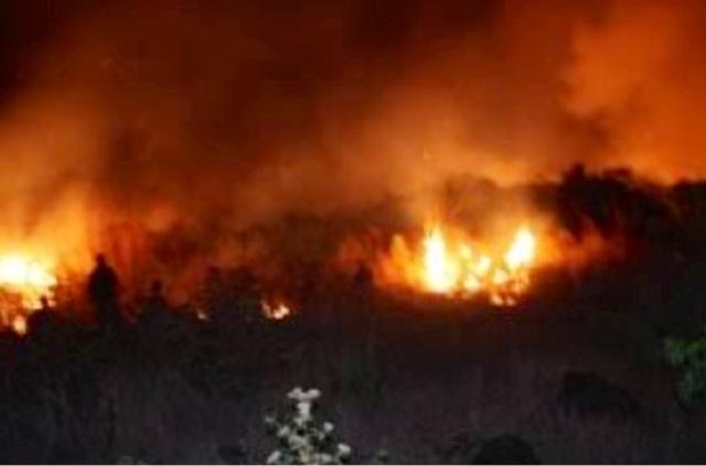 Kebakaran Gunung Penanggungan, Satwa Langka Dilindungi Terancam