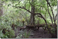 Dry Swamp