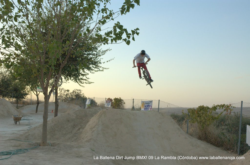 Ballena Dirt Jump BMX 2009 - BMX_09_0153.jpg