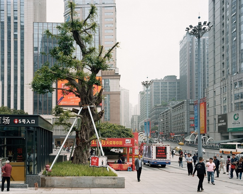 transplanting-trees-china-preston-14