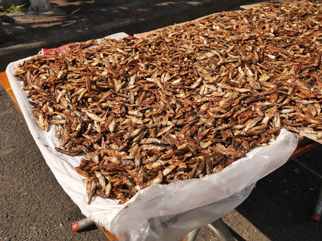 drying tiny fish in the sun