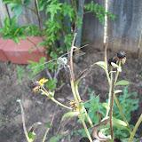Gardening 2009 - 101_5122.JPG