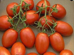 300px-TomateTrossRomanaTyp