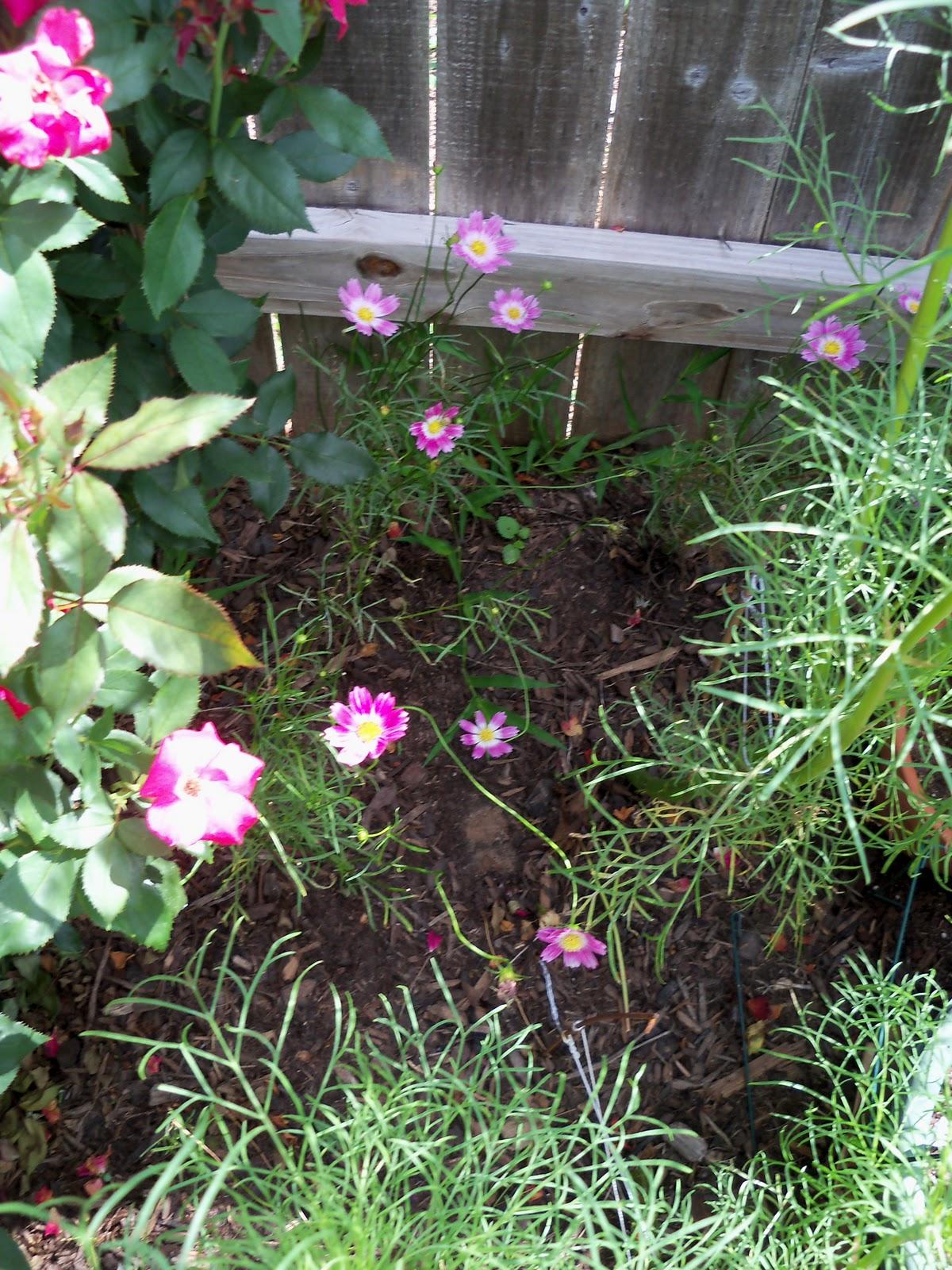 Gardening 2010, Part Three - 101_3807.JPG