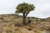 Lewis enjoying the shade provided by this Joshua Tree and an overcast day.