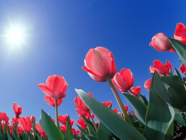 Florist Brunswick St: Popular Flowers From Australia