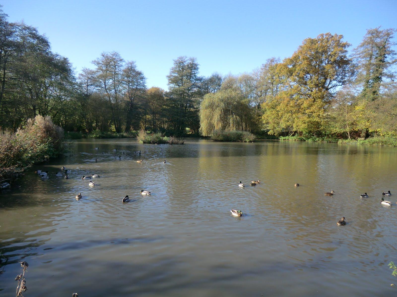 CIMG0283 Mill pond, Salmans Manor
