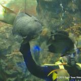 02-08-15 Corpus Christi Aquarium and USS Lexington - _IMG0513.JPG