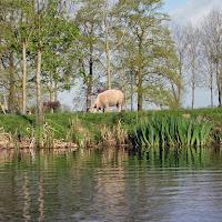 13-04-14 Kinderdijk