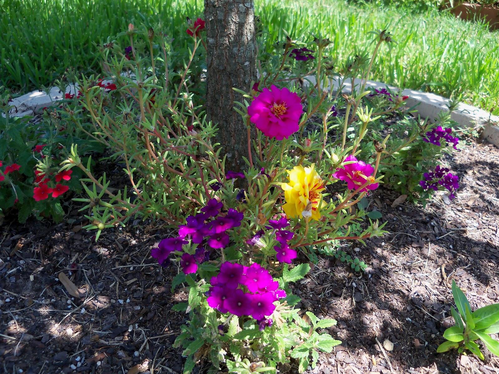 Gardening 2010, Part Three - 101_4464.JPG